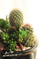 Cactus & Fleshy Plant / Nikon D300S