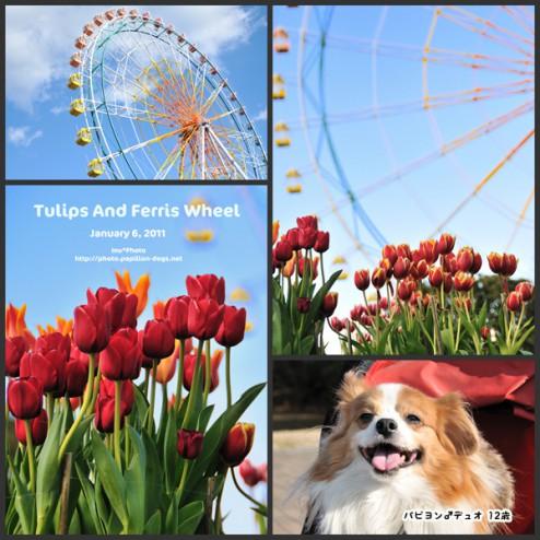 Tulips and Ferris Wheel